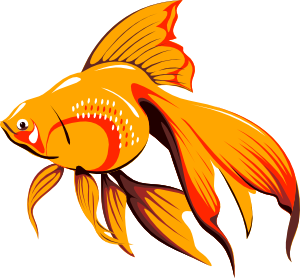 Goldfish_pescetto_svg_med_from_Clker_Medium