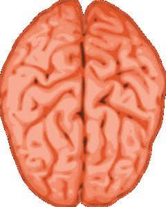 Brain Medium from Clker